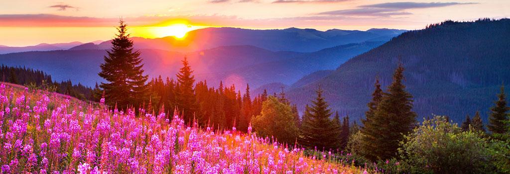 Сочинение ЕГЭ – Проблема понимания красоты природы по тексту В. Белова